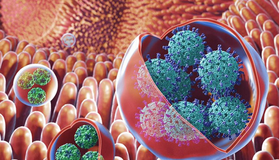 В Бельгии созданы принципиально новые препараты от гриппа и лихорадки Зика