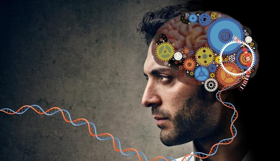 Мозг в виде механизма