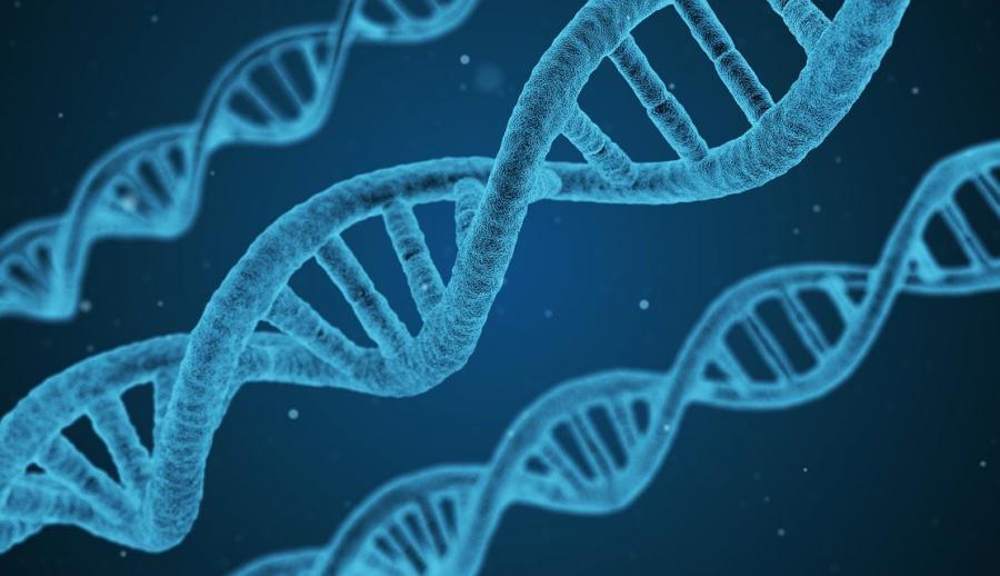 Нити ДНК