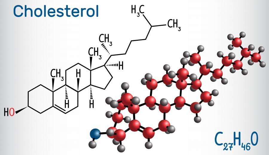 химическая формула и модель холестерола