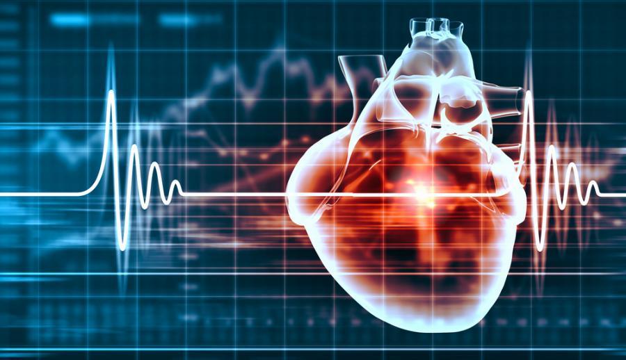 образ сердца человека с кардиограммой